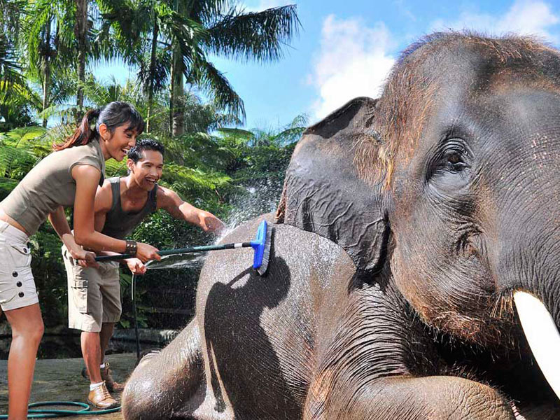 Things to do in Bali Elephant Safari Bali Land Tours with Dving Indo