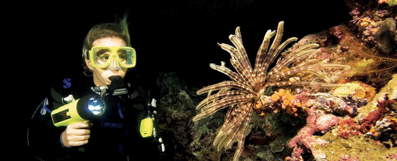Bali PADI Advanced Course Night Dive