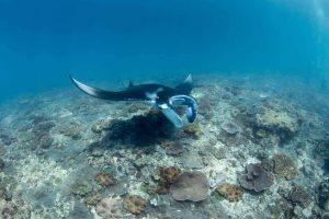 Diving day trip manta