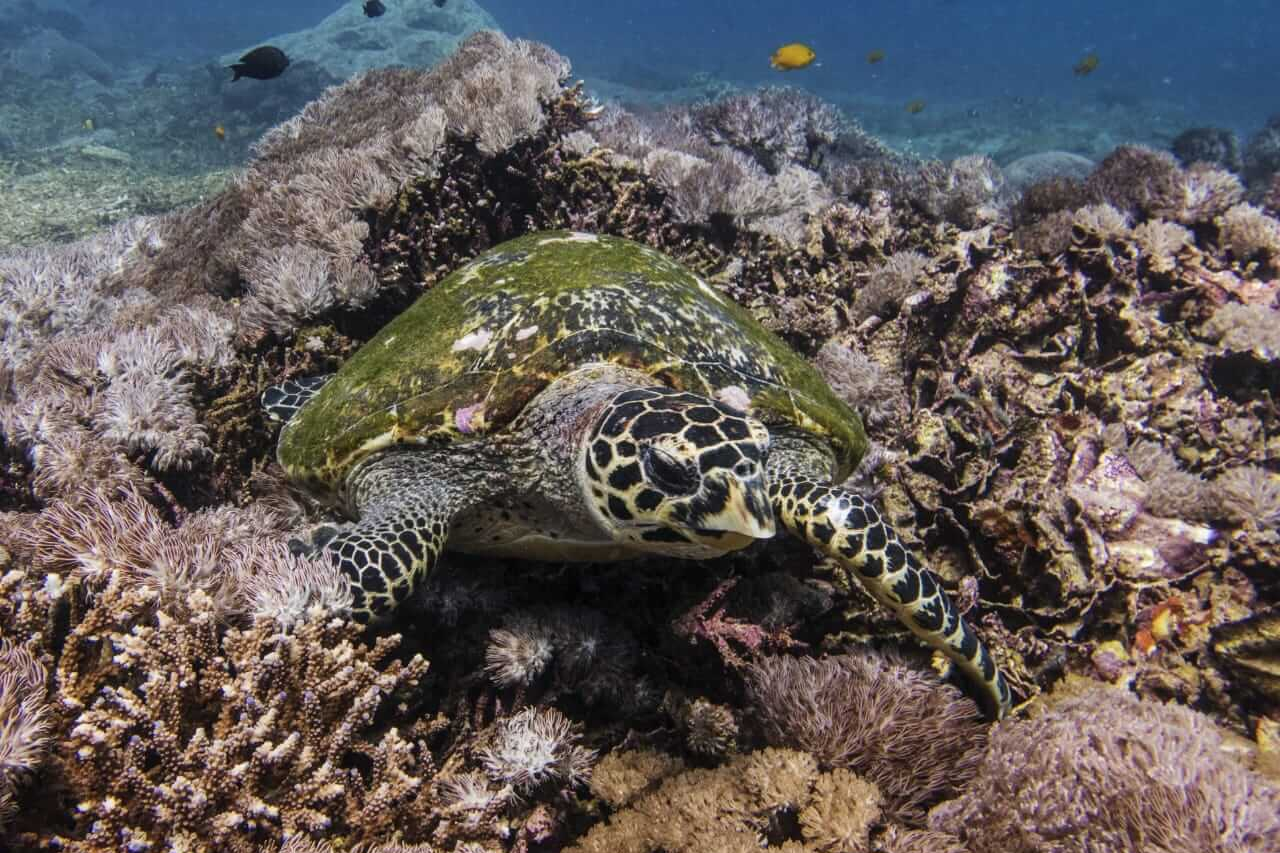 turtle Discover Diving