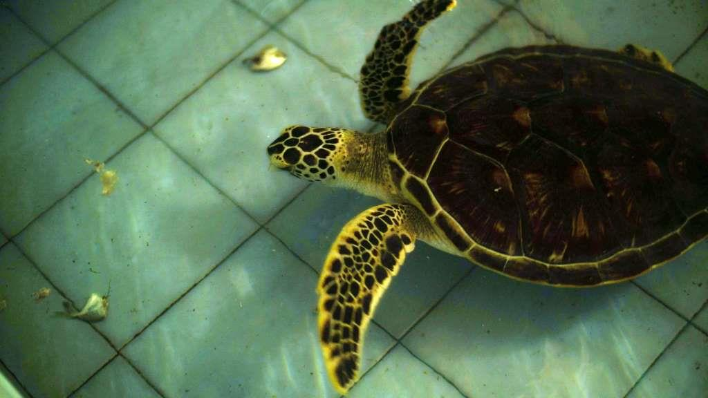 Turtle conservation centre bali