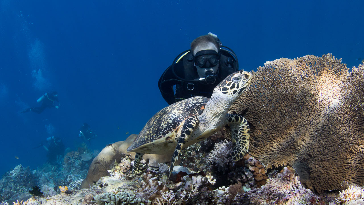 turtle and diver home slider